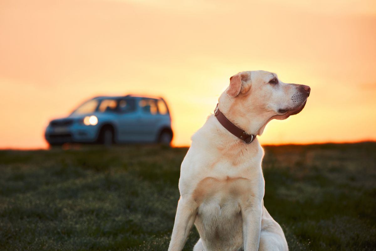 Make a clear route before going a trip with your lovely dog
