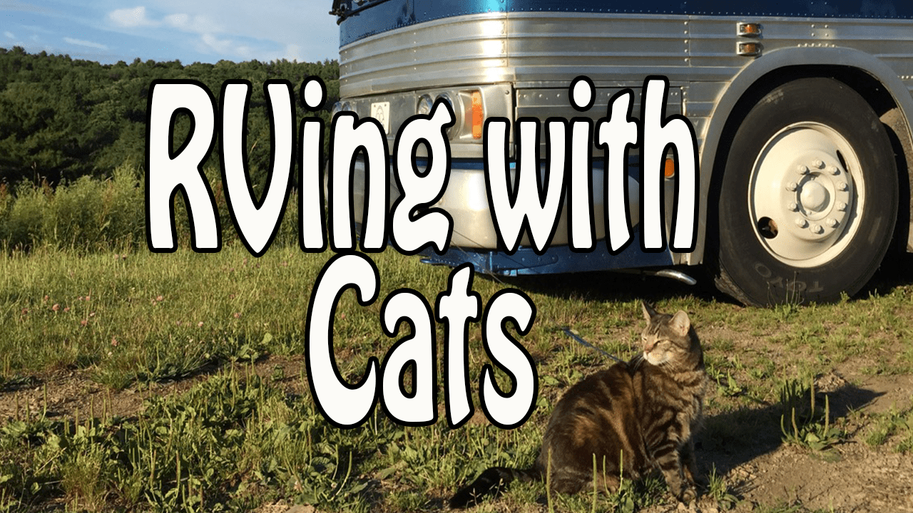 RVing with cats will bring to you more funny experience with your little friend
