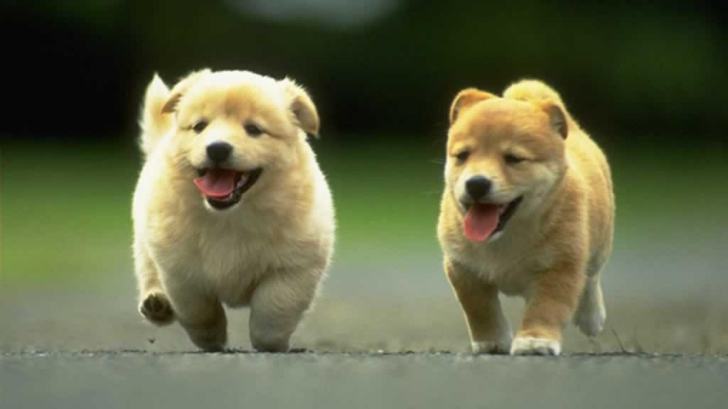 2 cute puppies playing with each other